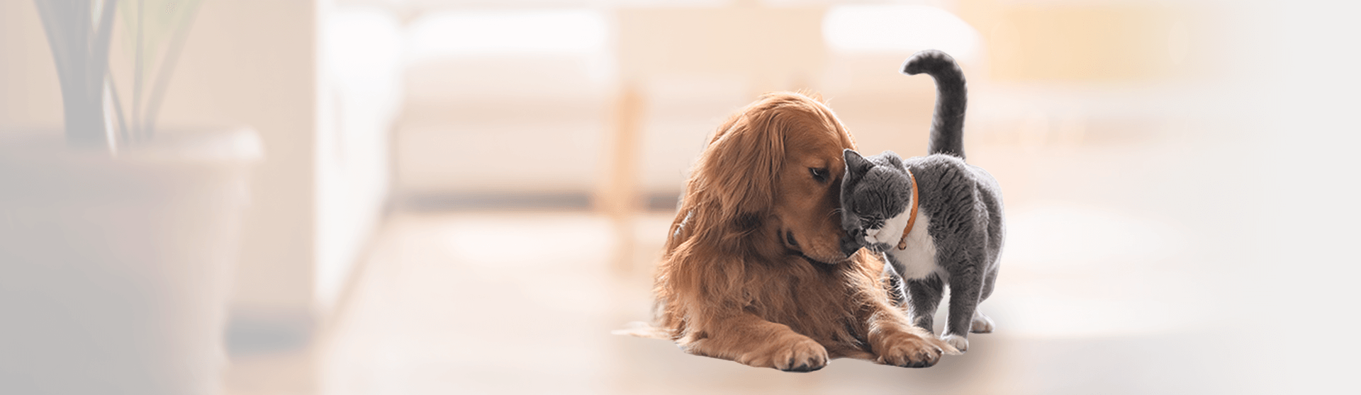 PETPROTECT Dog