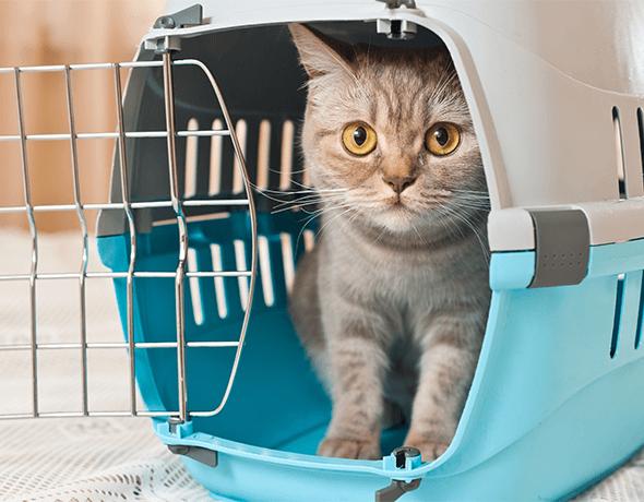 Petprotect - Katze in Katzenkrob